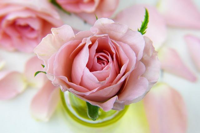 hoa đẹp nhất thế giới 12