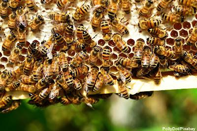 ecologia, biologia, Preservar espécies, preservar, espécies, serviços ambientais, environmental services, environmental, services, meio ambiente, conservação, biodiversidade, ambiental, sobrevivência humana, abelhas, bees, polinização, pólen