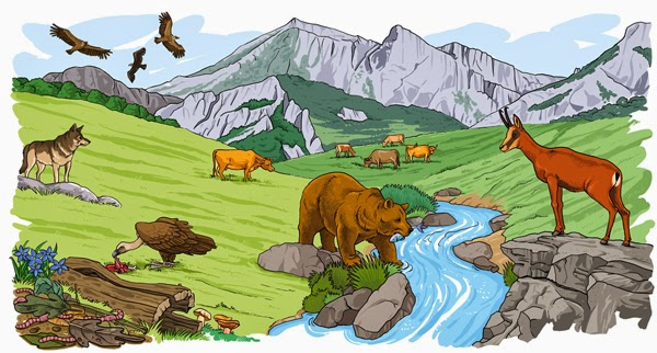 Los ecosistemas for Caracteristicas de un mural