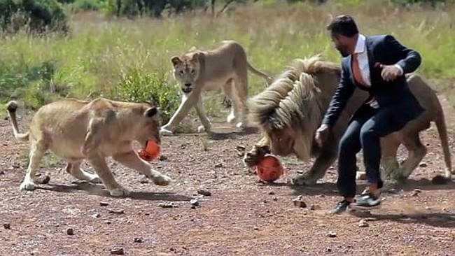 White Wolf : 'Lion Whisperer' Kevin Richardson plays football With ...