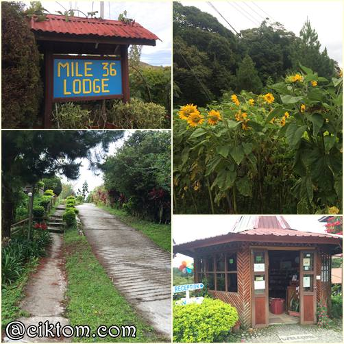 Review Penginapan Cik Tom di Mile 36 Lodge, Kundasang