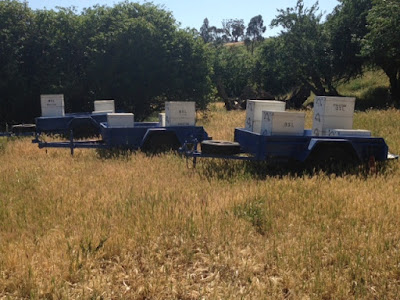 eight acres: getting started with bees - Jembella Farm