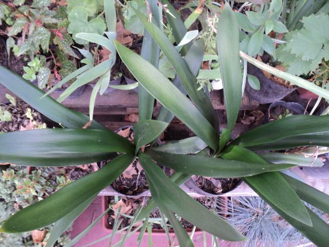 Plantas morenal otras plantas ornamentales for 2 plantas ornamentales