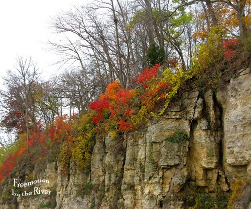 Sumac on cliff