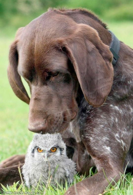 In Nature Everything Is Possible! 23 Unusual Animal Friendships That Will Melt Your Heart
