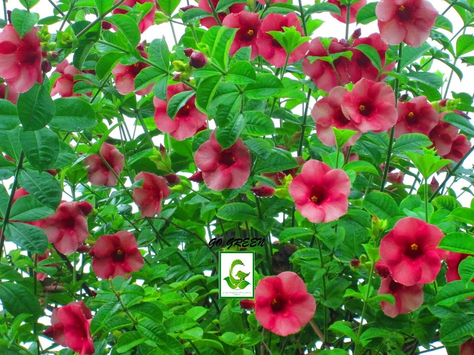 Seeds For Sale Online Rare Flower Seeds Plants Cuttings For Sale