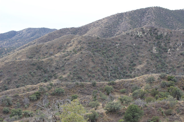 Guided%2BCoues%2BDeer%2BHunts%2Bin%2BSonora%2BMexico%2Bwith%2BJay%2BScott%2Band%2BDarr%2BColburn%2BDIY%2Band%2BFully%2BOutfitted%2B26.JPG