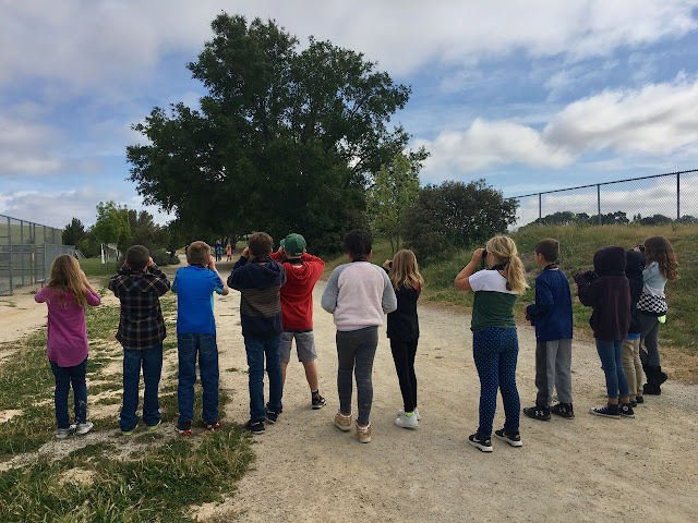 Students, on a field trip, watching a California Scrub-Jay