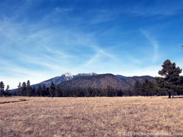 Looking across dry, winter grass at snow and pines on Humphrey Peak from Flagstaff, Arizona's, Buffalo Park.