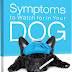 Symptoms To Watch For In Your Dog: Excessive Drooling