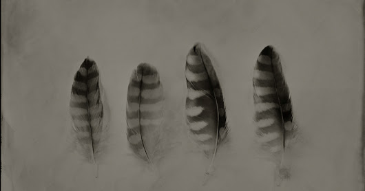 Ted Preuss - Blog: Found Feathers – Wet-plate Collodion