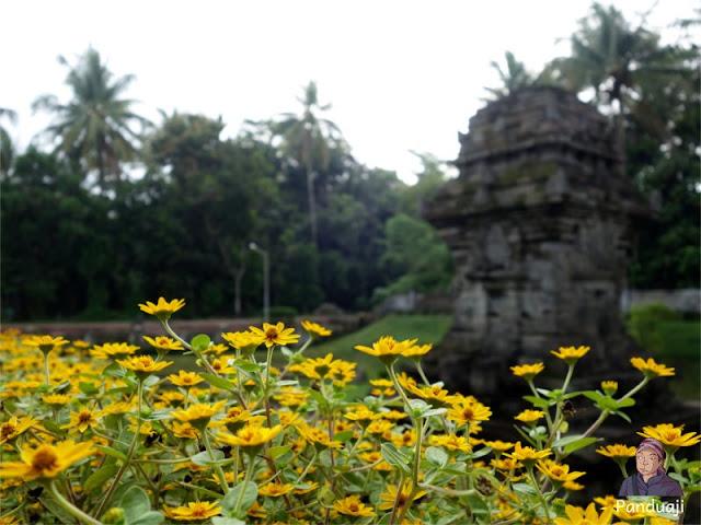 Bunga bunga di Candi Sawentar