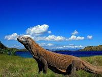 Wisata Pulau Komodo, Keindahan Dunia yang mengagumkan