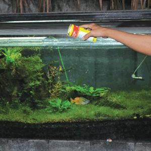 cara merawat aquarium dan aquascape