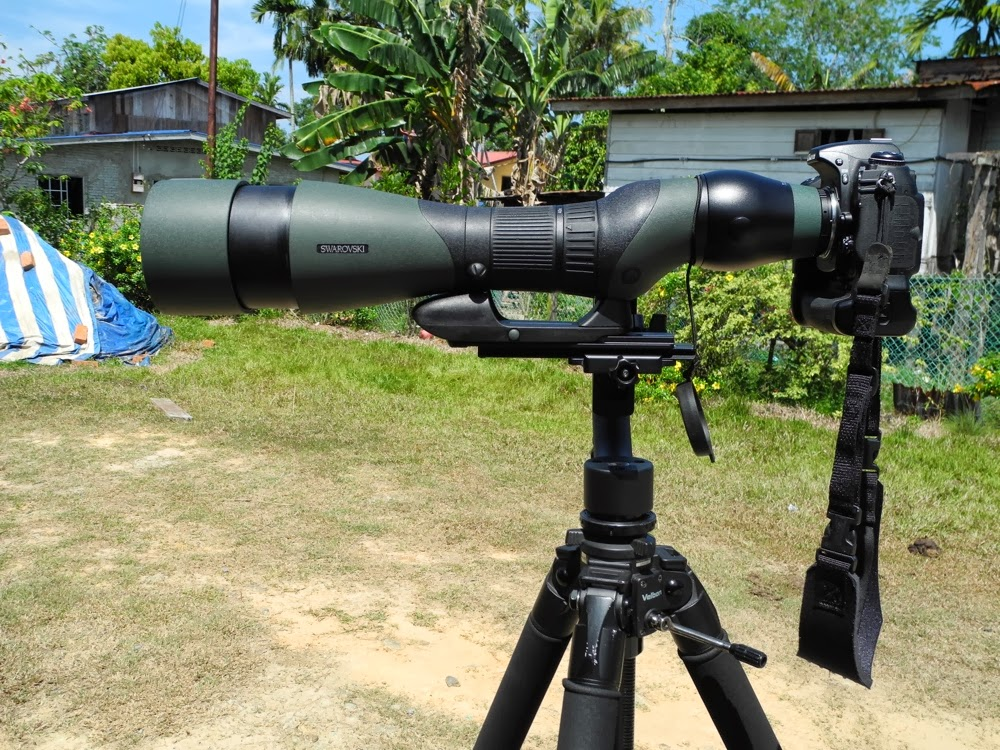 Review of Swarovski Modular Spotting Scopes