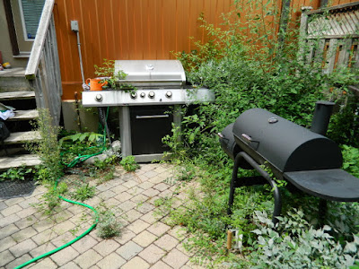 Toronto Playter Estates backyard weeding before Paul Jung Gardening Services