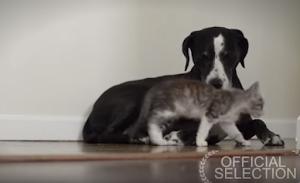 Gatinho conta em vídeo como é ser adotado