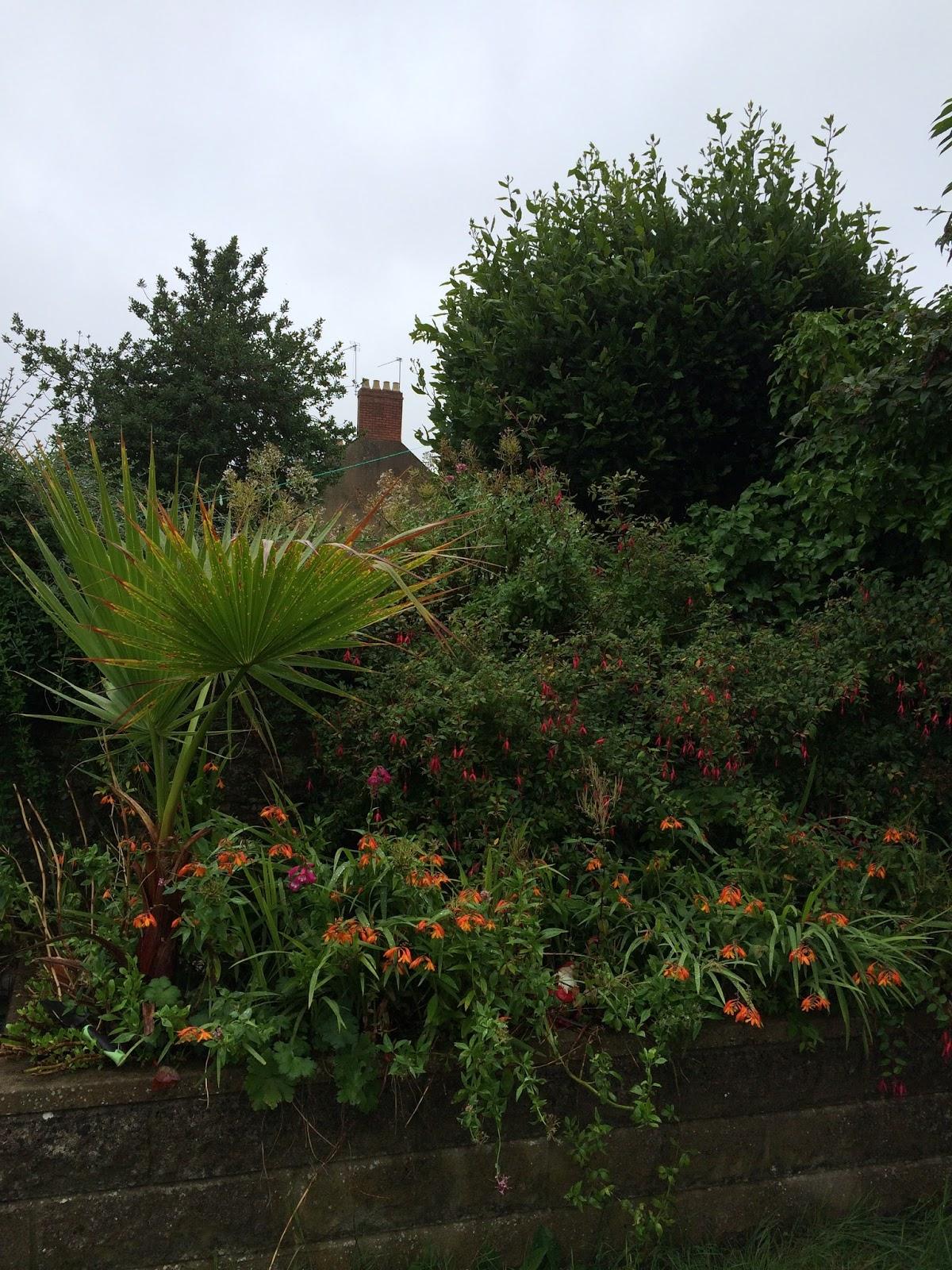 garden clean up - the Hobbis family back garden