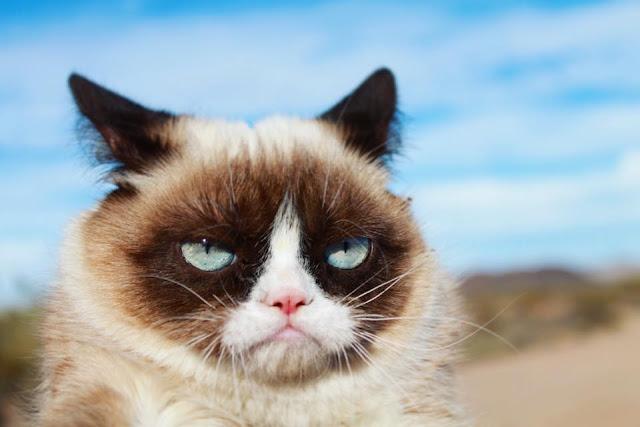 Grumpy Cat, Instafamous Kucing Mati Kerana Jangkitan Urinary