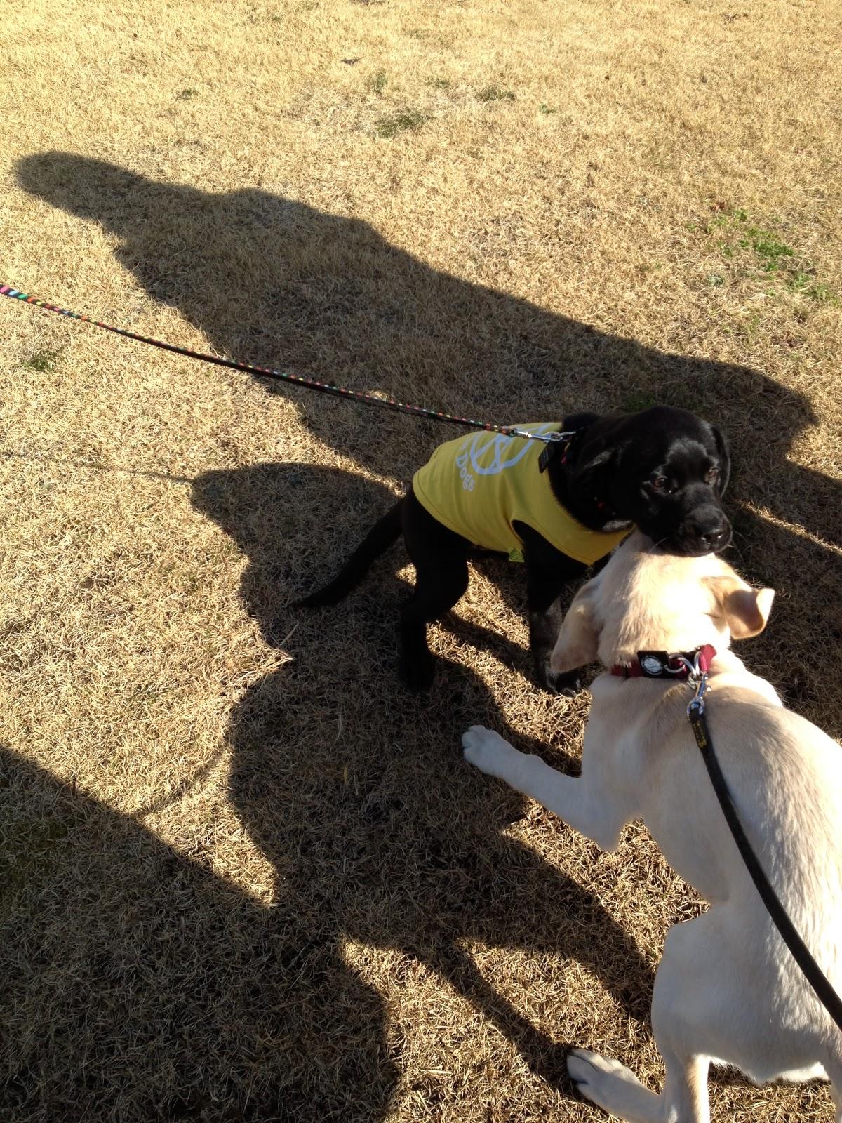 盲導犬 候補 エレナの日記 喧嘩はやめて