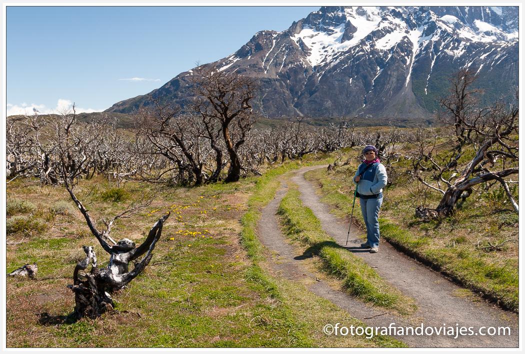 Mirador lago Nordenskjold  del Paine en Chile