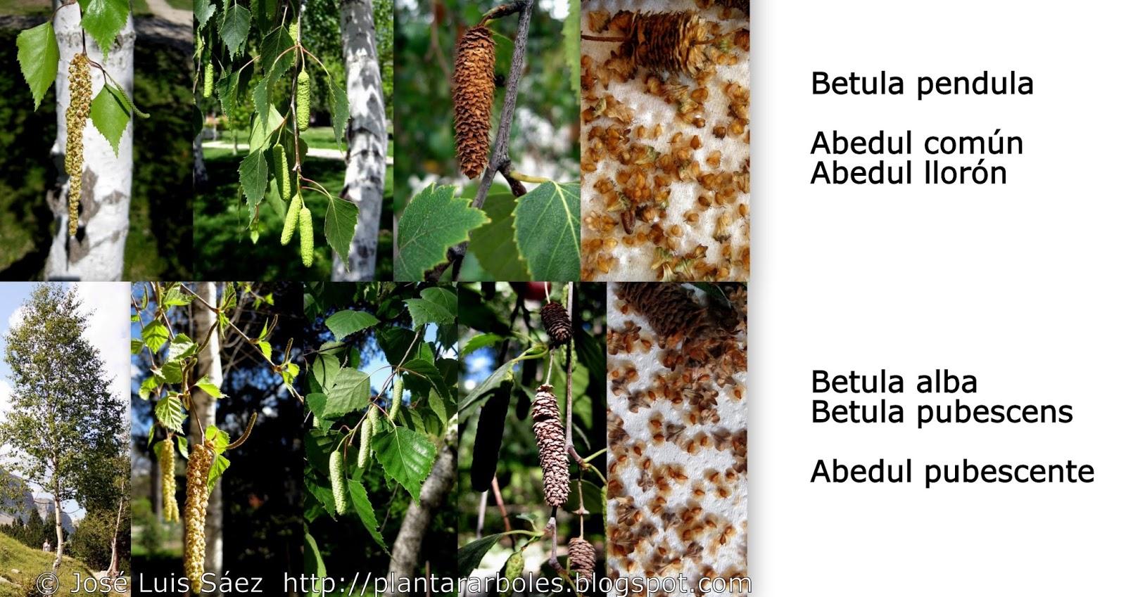Plantar rboles y arbustos tipos de frutos y semillas for Lista de arboles perennes