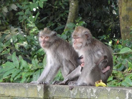 Ubud Bali Holy Monkey Forest - Best Bali Holiday Tour Packages