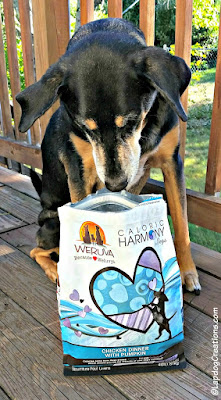 senior mixed breed dog sniffing bag of dog food