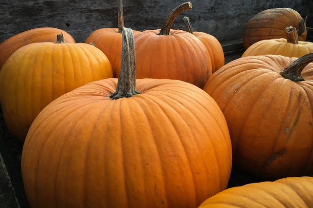 The Pumpkin Patch ~ 15 Recipes featuring Pumpkin!