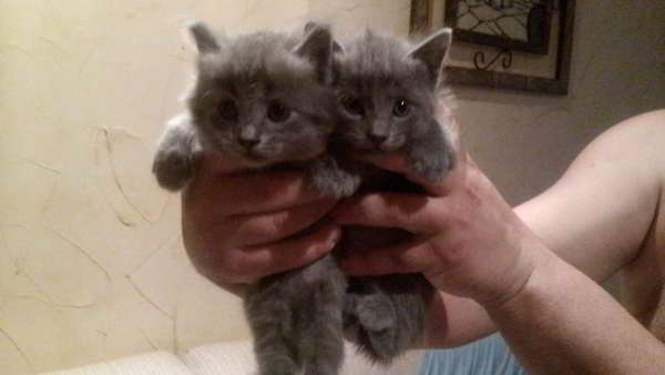 Dos gatitos abandonados de un mes en adopci n alicante - Gatitos de un mes ...