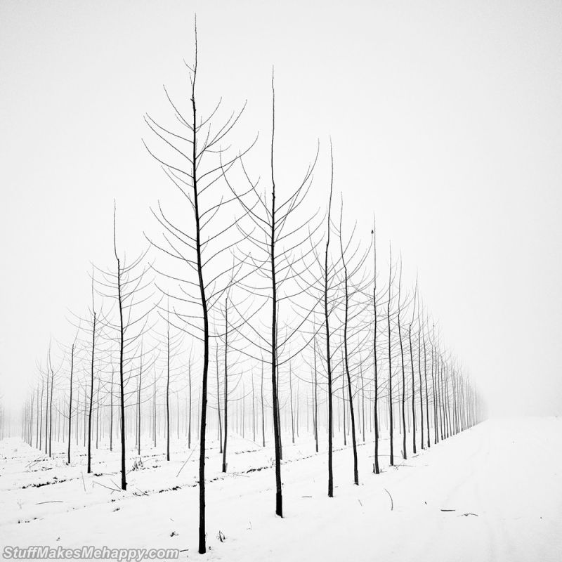 Delightful Black and White Landscape Pictures by Pierre Pellegrini