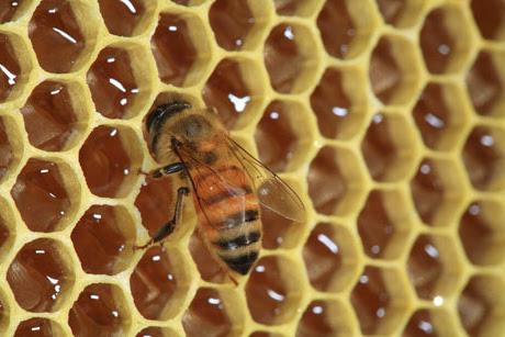 Πωλειται μέλι στην Χαλκιδική