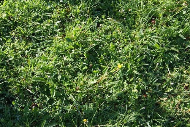 Análisis de suelos mediante la observación de la flora espontánea