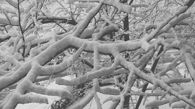 Голям сняг