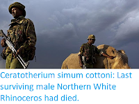 http://sciencythoughts.blogspot.com/2018/03/ceratotherium-simum-cottoni-last_20.html