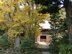 常楽寺のイチョウ