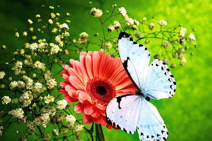 Semua Posting Tentang Flower Butterfly Wallpaper Hd Download For