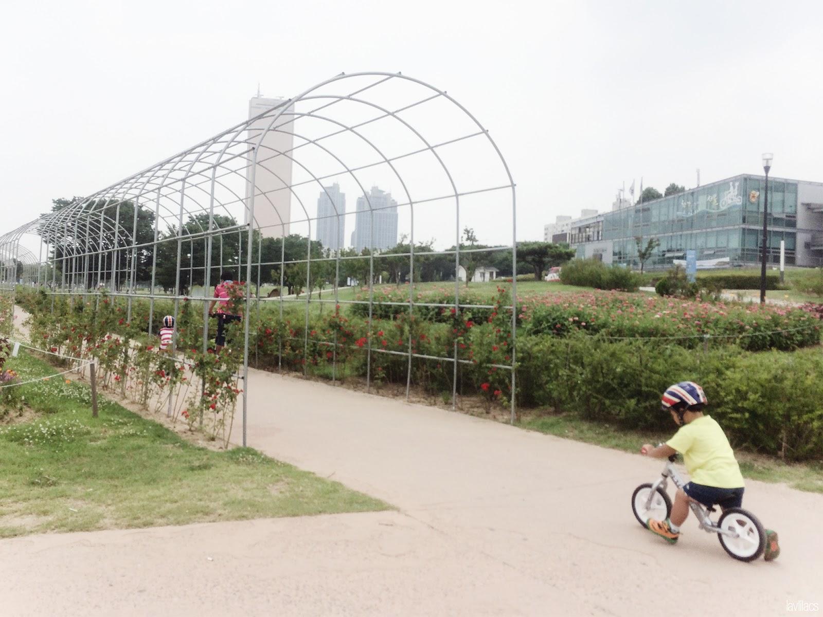 Seoul, Korea - Summer Study Abroad 2014 - Yeouido Park - Han River - family biking