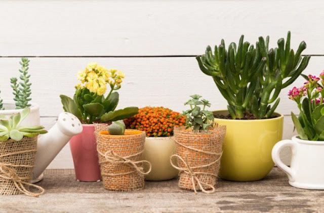 φυτά εσωτερικού χώρου που βοηθούν στην καταπολέμηση του άγχους giortazo