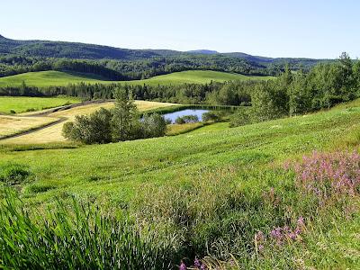 Appalachian flowers, Appalachians lakes, Appalachian villages, Appalachian farms, Appalachian roads, Appalachian drives, Appalachian forests, Appalachian mountains, Appalachian highlands, Appalachians, Canada Appalachians, Quebec Appalachians, Riviere-du-loup, Saint-Gabriel-de-Rimouski, Sainte-Angèle-de-Mérici, Amqui, Causapscal, Quebec, Quebec tourism, Canada, Canada tourism, Visiting Canada, Visiting Quebec