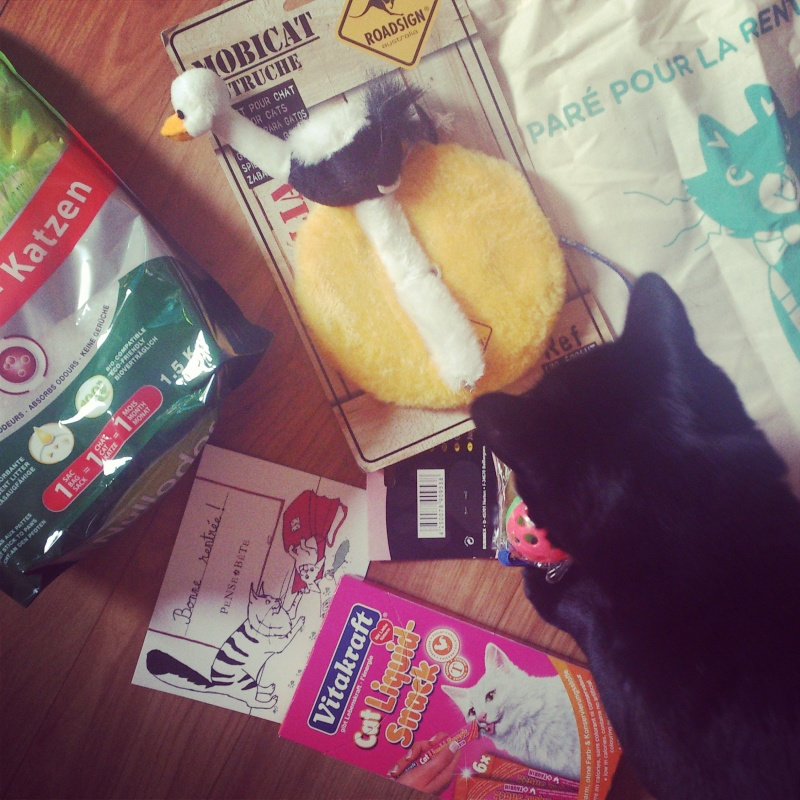 Gucci le chat et sa kittybox