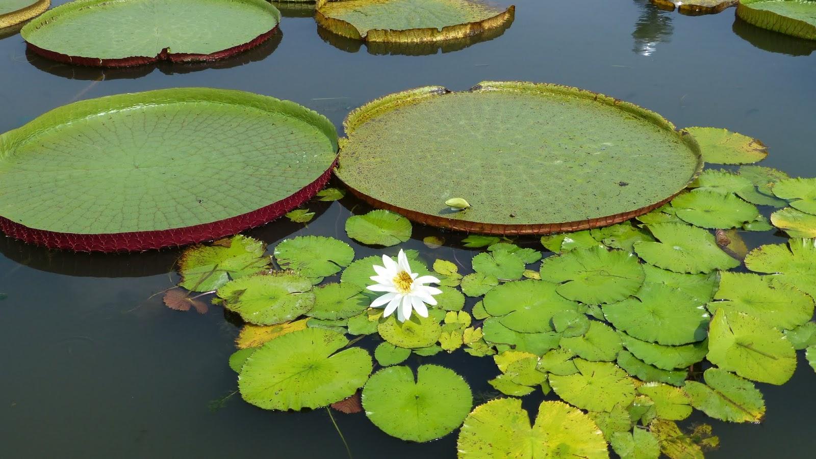 すべての美しい花の画像