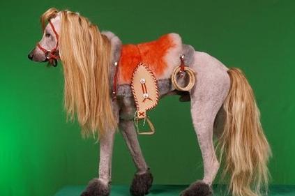 kandeej com: How to dye your dog like a lion, tiger or bear