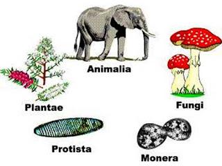 Perbedaan Ciri Kingdom Monera, Protista, Fungi, Plantae & Animalia + Penjelasan dan Contohnya