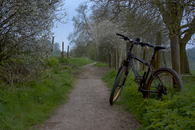 spring blossom off road path