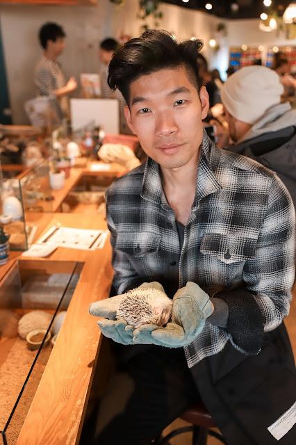 Leo Chan at Hedgehog Cafe in Tokyo
