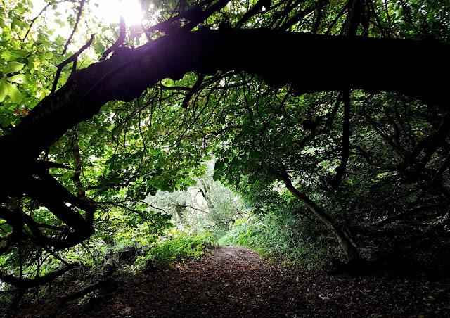 Dappled shade under the trees