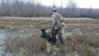 north texas retriever trainers|north texas dog trainers|north Texas duck hunts