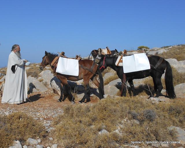 Ευλογία των ιπποειδών στο ερημοκλήσι του Αγίου Μάμμα στην Υδρα