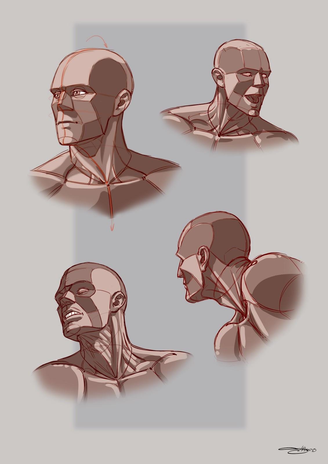 Frame struttura del viso e muscolatura collo